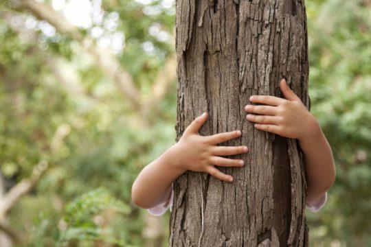 enfant-tron-arbre-tomwwod